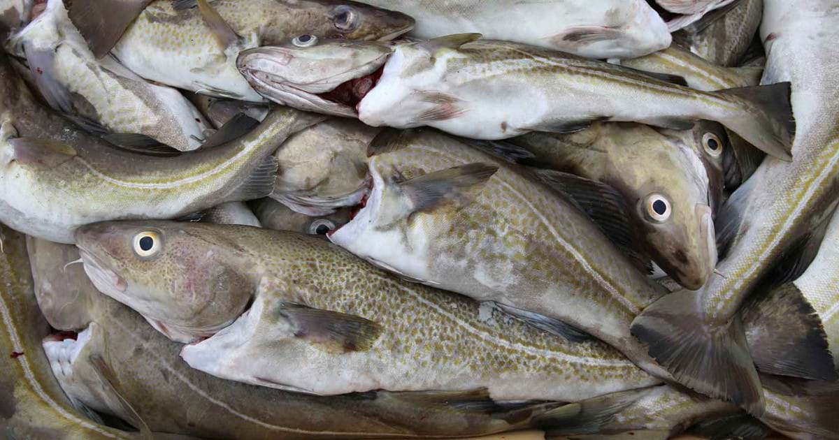 Austevoll Seafood